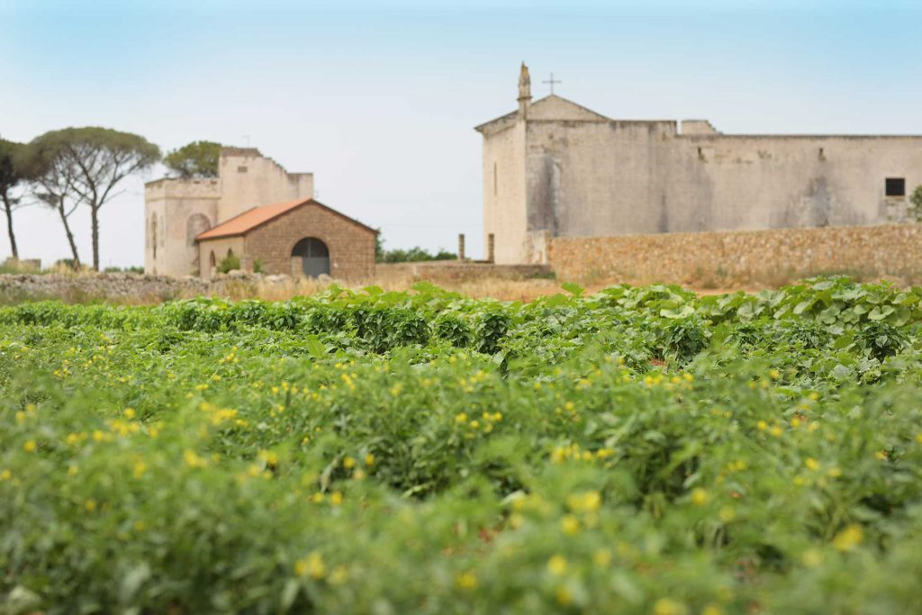 Masseria Ogliastro, our organic farm